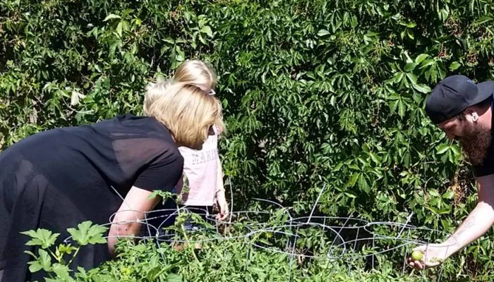 2 adults and 1 child looking bent down looking at tomato plants.
